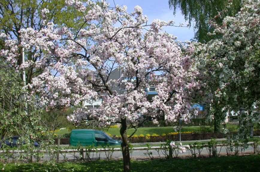 Afbeeldingsresultaat voor belmonte arboretum rosaceae